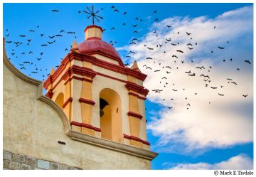 Picture of birds flying from a church tower in the Mexican town of Oaxaca