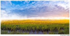 Tybee Island Coastal Marsh - Dramatic Landscape Panorama - Georgia Coast Print by Mark Tisdale