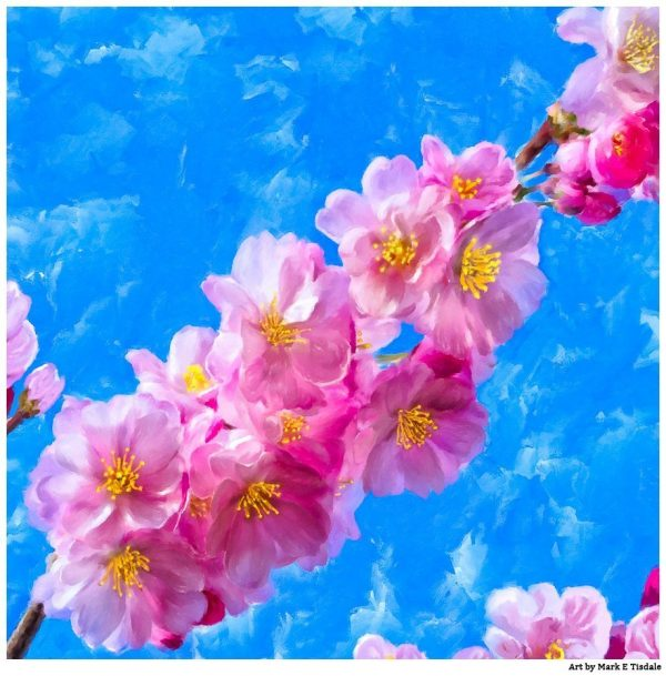 Cherry Blossom Artwork - Japanese Cherry Blossom Prints For Sale by artist Mark Tisdale