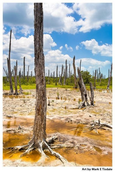 Driftwood forest - Celestún Mexico Print by Mark Tisdale