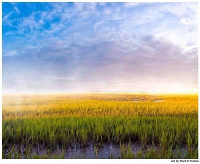Coastal Marshes On The Georgia Coast Near Tybee Island - Landscape Print by Mark Tisdale