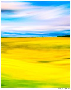 Golden Fields of Rapeseed In The English Countryside - Print by Mark Tisdale