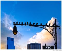 Birds Roosting On A New York City Lamppost - Manhattan Print by Mark Tisdale
