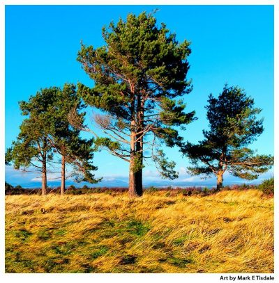 Trees on Culloden Battlefield - Scottish Highlands - Square Format art print By Mark Tisdale